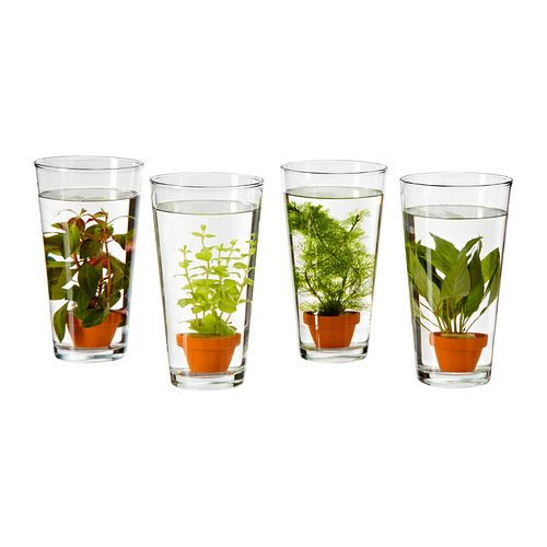 vattenrall waterplant in een vaas ikea huiswerk pinterest water plants plants and terraria. Black Bedroom Furniture Sets. Home Design Ideas