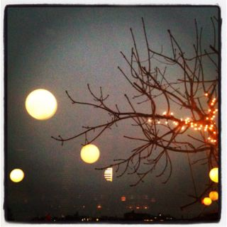Bubbles and Branches - 3.16.2013