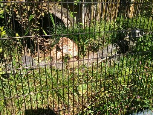 井の頭自然動物園の山猫。。。