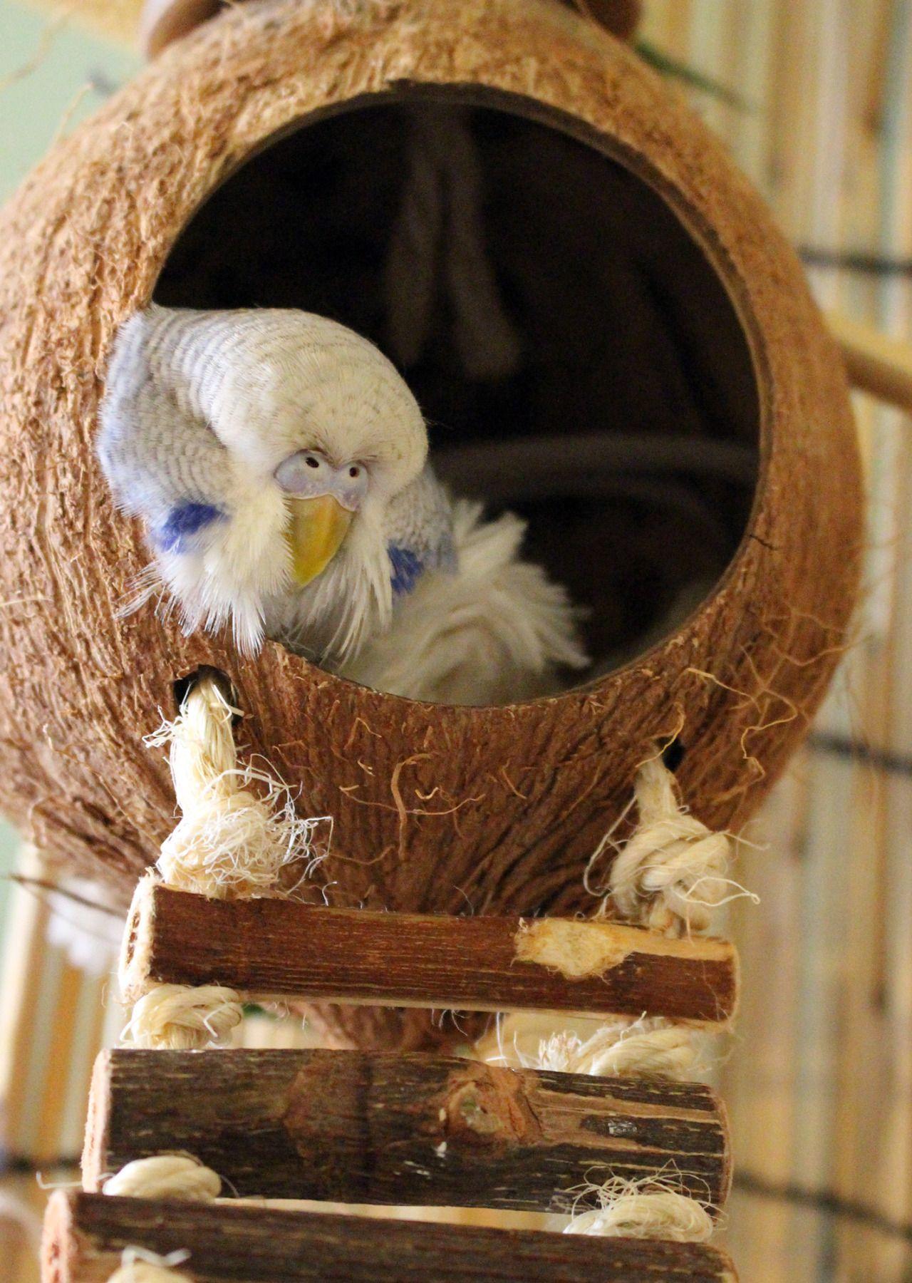 14 × 15 × 15 Cm Bird Supplies Bird Bathtub Bath Clean Box Toy For Budgies Canary Cage Trixie