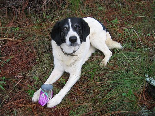 Besa Mae. A good dog I moved to Mexico with. The best dog I ever knew.  IMG_1836 by brianfey, via Flickr