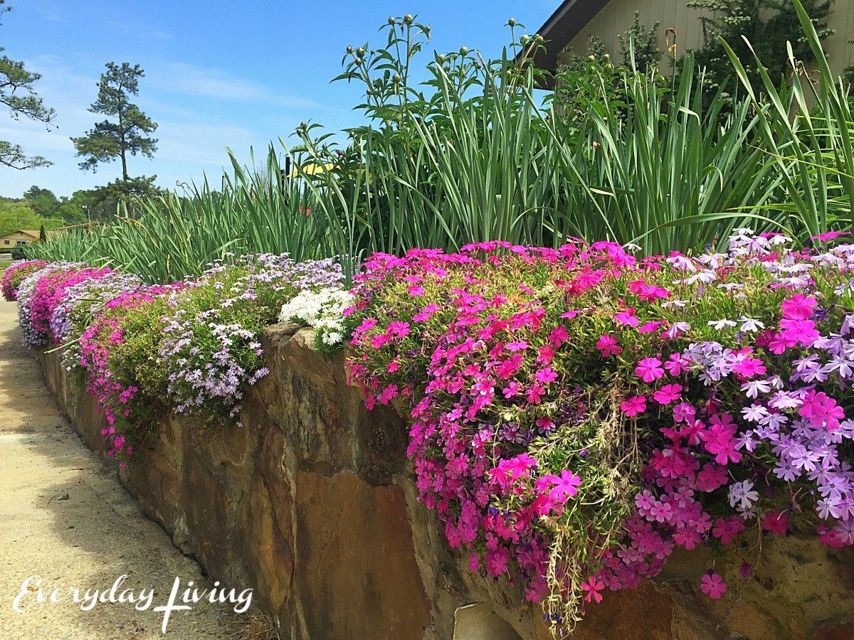 In Our Own Backyard | Backyard, Garden, Plants