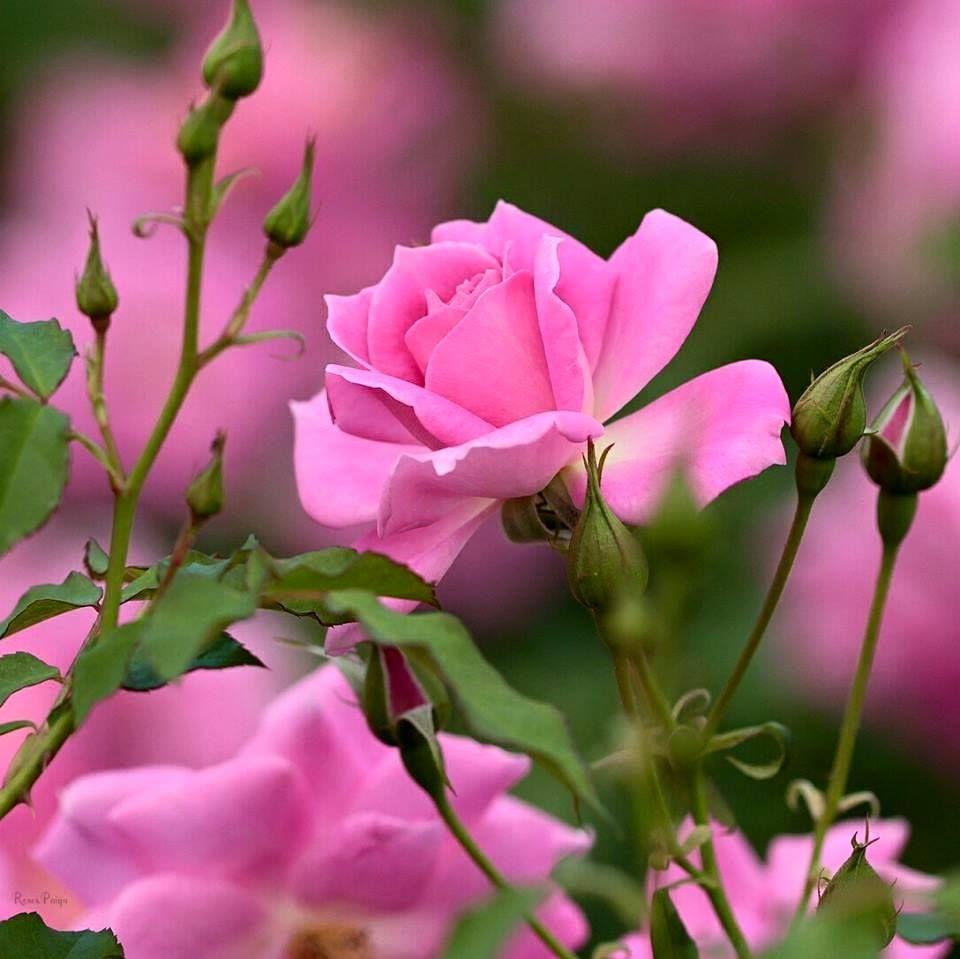 этого картинки цветы с цитатами хорошего настроения была одета
