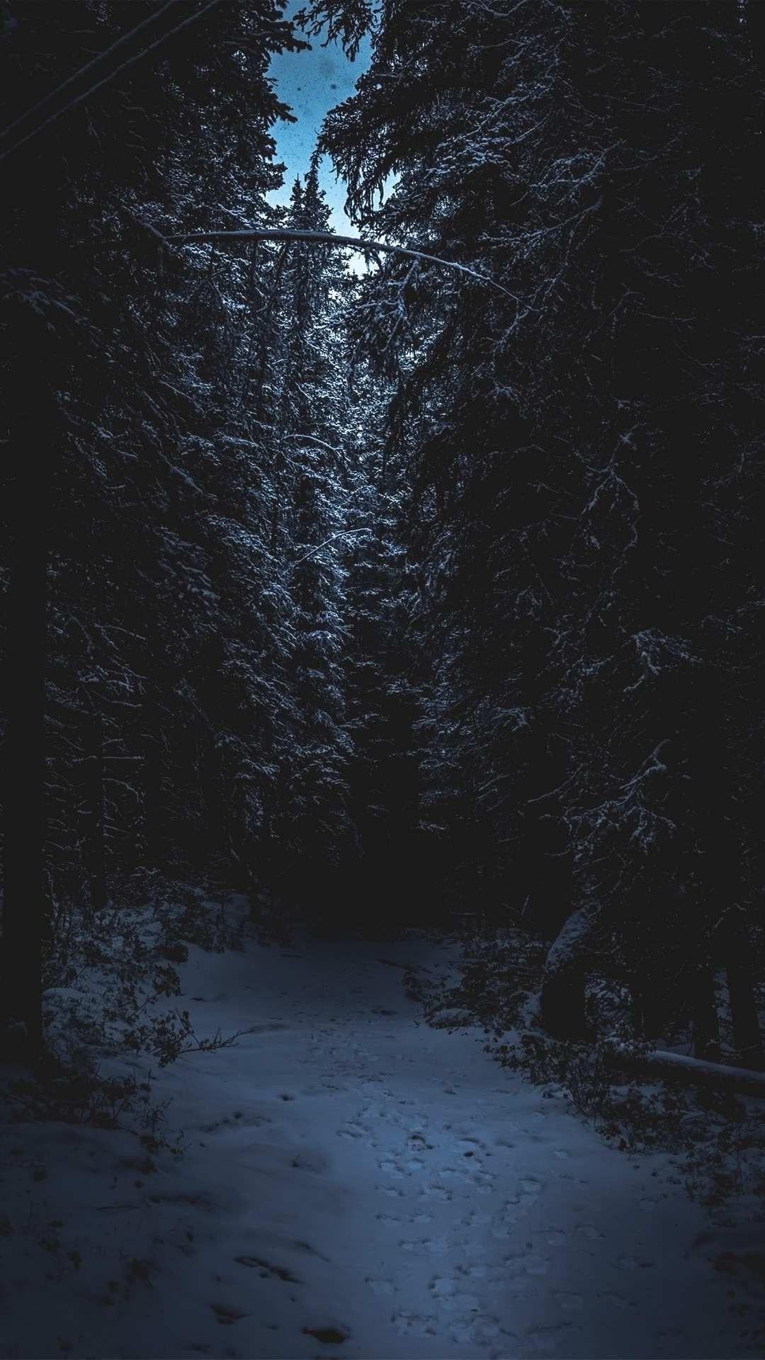 Épinglé par Malaxtre sur ush en 2020 Forêt sombre, Fond