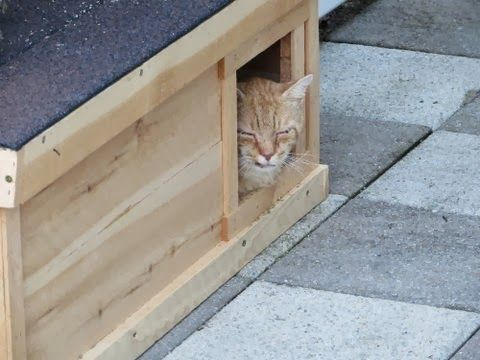 Pet DIY Shelter Cats