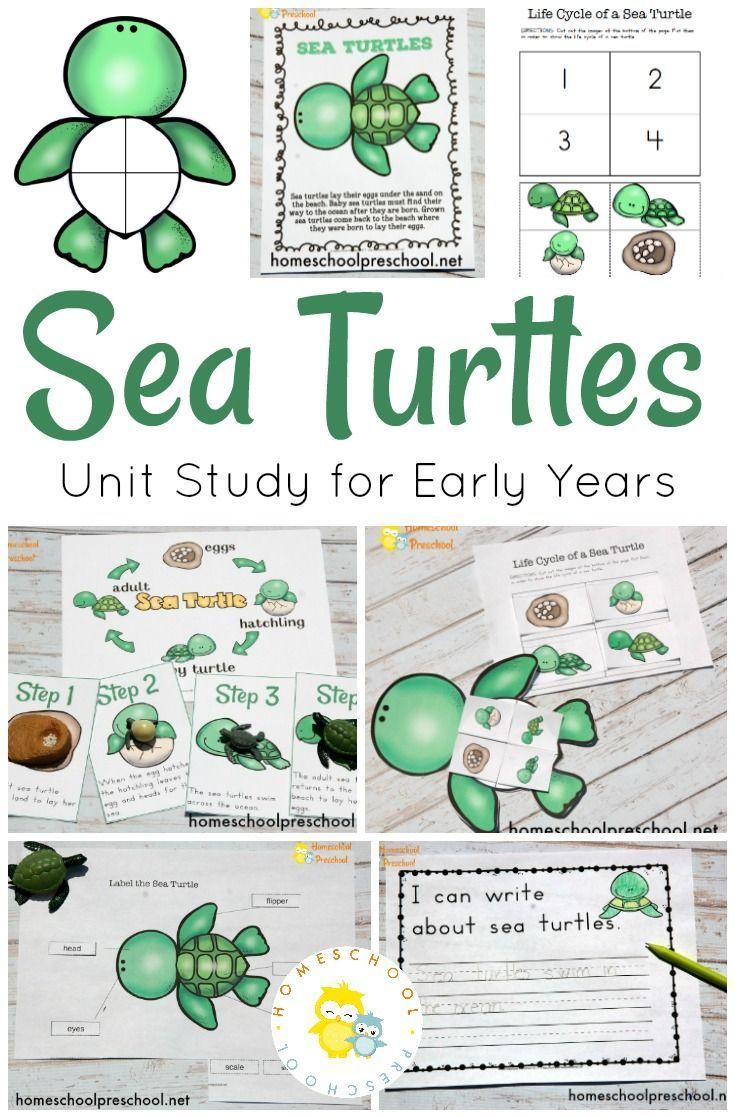 Preschool Sea Turtle Life Cycle Printable Unit Study Turtle Life Cycle Sea Turtle Life Cycle Cycle For Kids [ 1118 x 735 Pixel ]