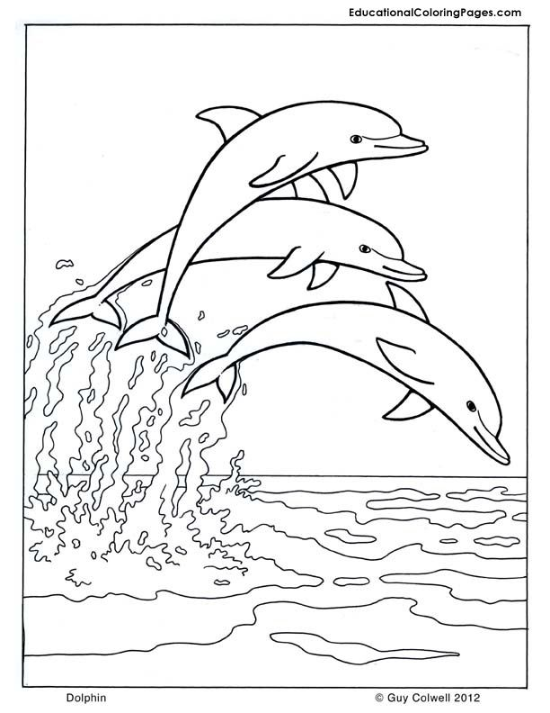 photo regarding Dolphin Coloring Pages Printable named Dolphin coloring, dolphin illustrations or photos, no cost printable dolphin
