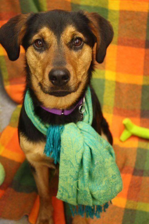 Berea S Arf Needs Home For Shepherd Hound Mix Hound Shepherd Animals Friends