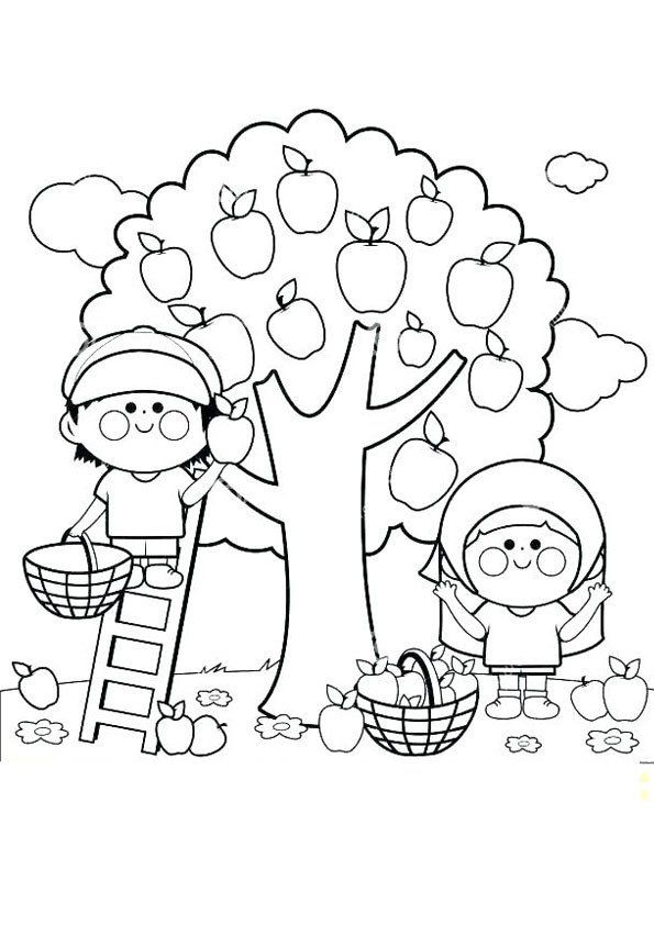 20 Apple Picking Coloring Pages Caitlin Gallagher Apple Coloring Pages Fruit Coloring Pages Tree Coloring Page