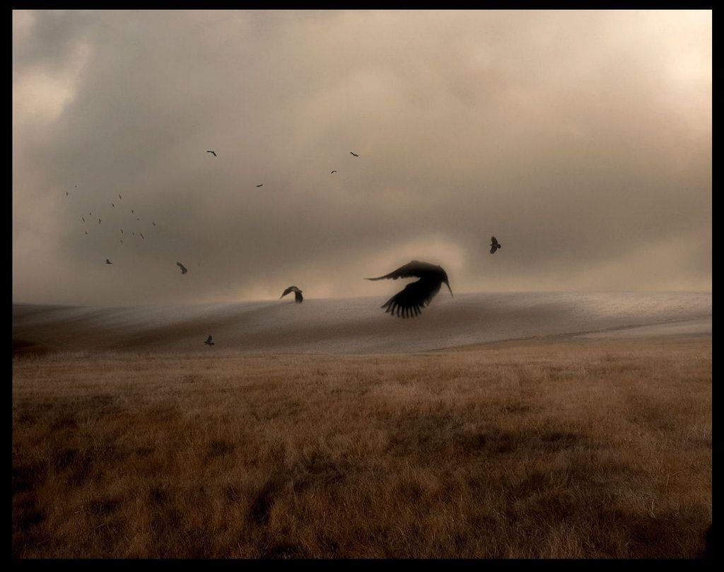 the ravens flyaway by SHUME-1 on DeviantArt