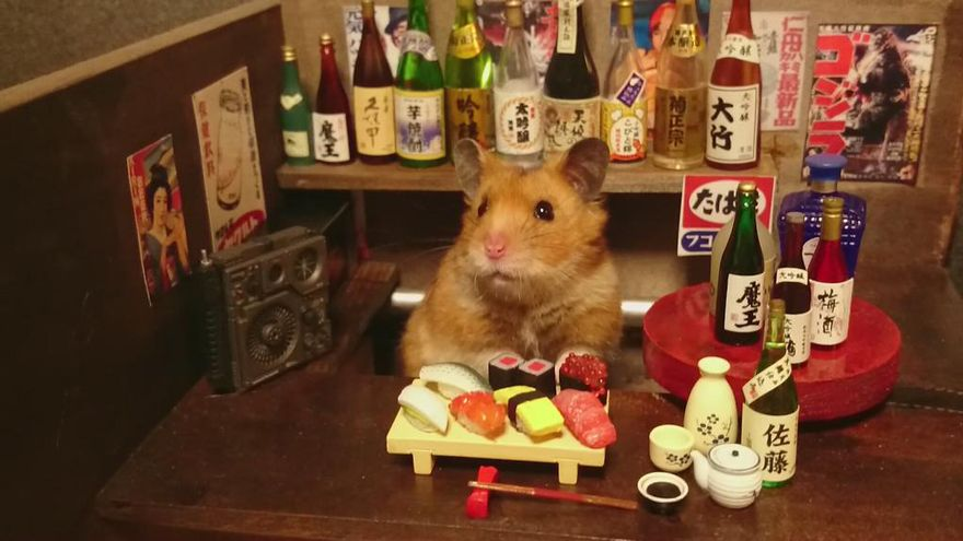 Little Hamster Bartenders Serving Tiny Food And Drinks Animal - Hamster bartenders cutest thing youve ever seen