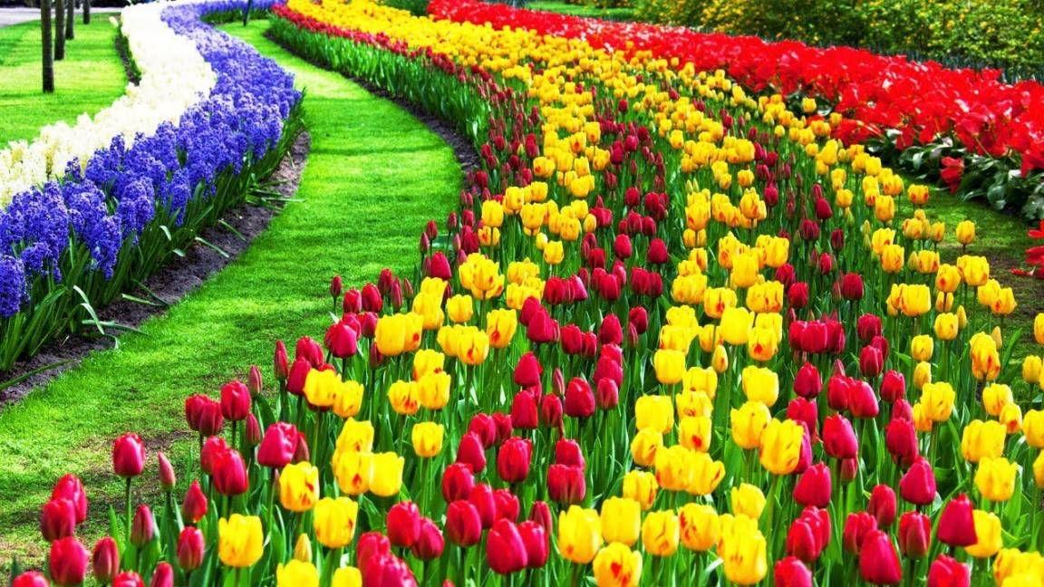 17 Inspiring Tulip Flower Garden Collection In 2020 Beautiful Flowers Garden Tulips Garden Gardens Of The World