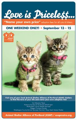 Oregon Humane Society Pet Adoption Specials Pet Adoption Cat