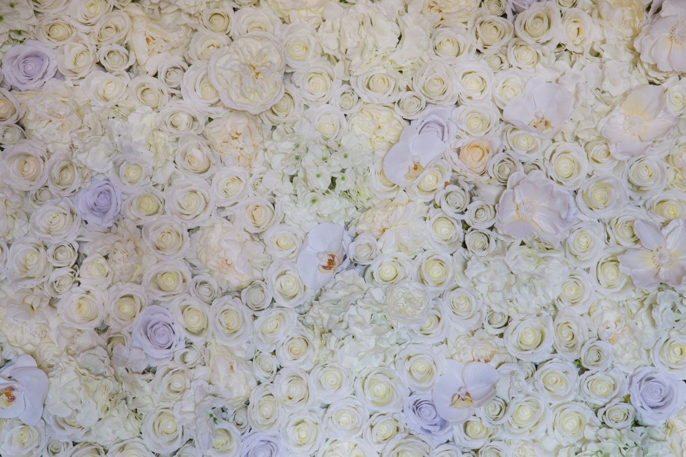 Ivory Bliss Flower wall The Flower Wall Sydney (With