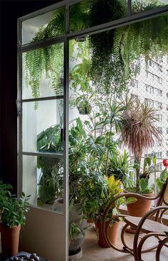 Meu apê é uma floresta: uma sala cheia de plantas e inspiração para quem também adora um pouco de natureza dentro de casa.