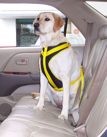 Seat Belts For Dogs Dog Seat Belts Pet Car Seat Dog Harness