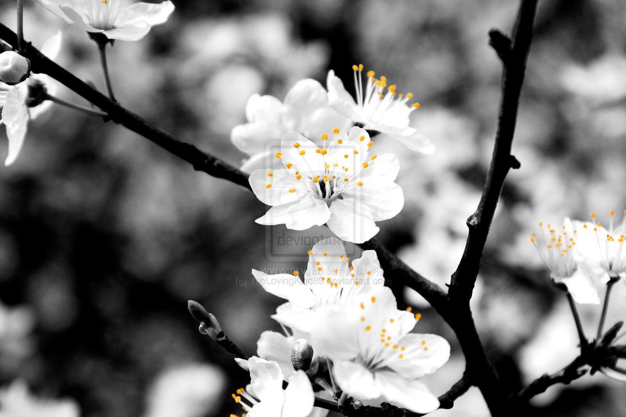 Black And White Flowers Black And White Flower Photography Tumblr