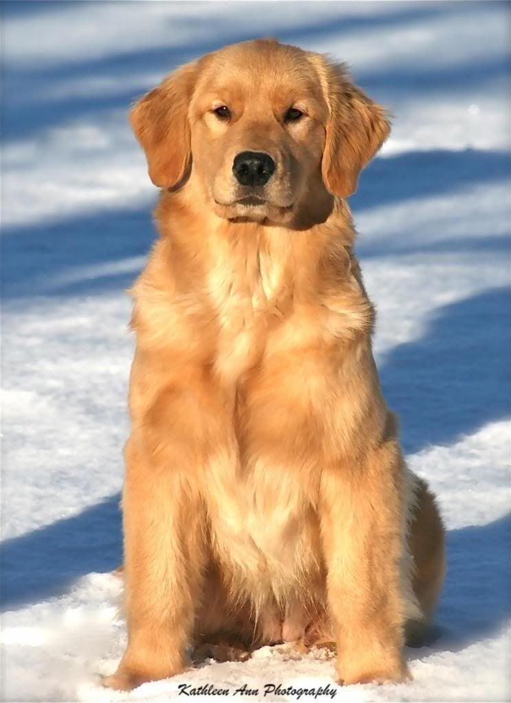 5 Friendly Facts About Golden Retrievers Dogvills Best Dog