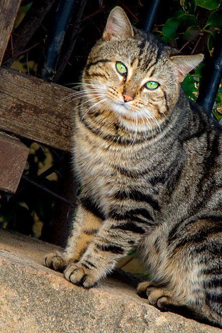 Katze in Santa Flavia http://www.trip-tipp.com/sizilien/reise/urlaubsziele/santa-flavia.htm #animals # cats #cat #sicily #sicilia