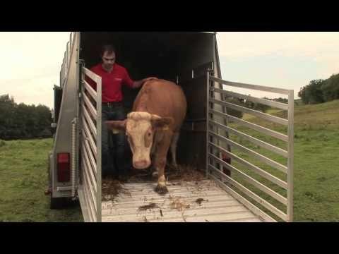 Gaucho Tanz Von Stier Bandit Als Dank Youtube Animals How To