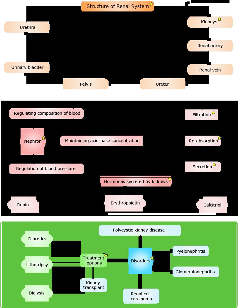 Immune System Concept Map Worksheet Www Topsimages Com