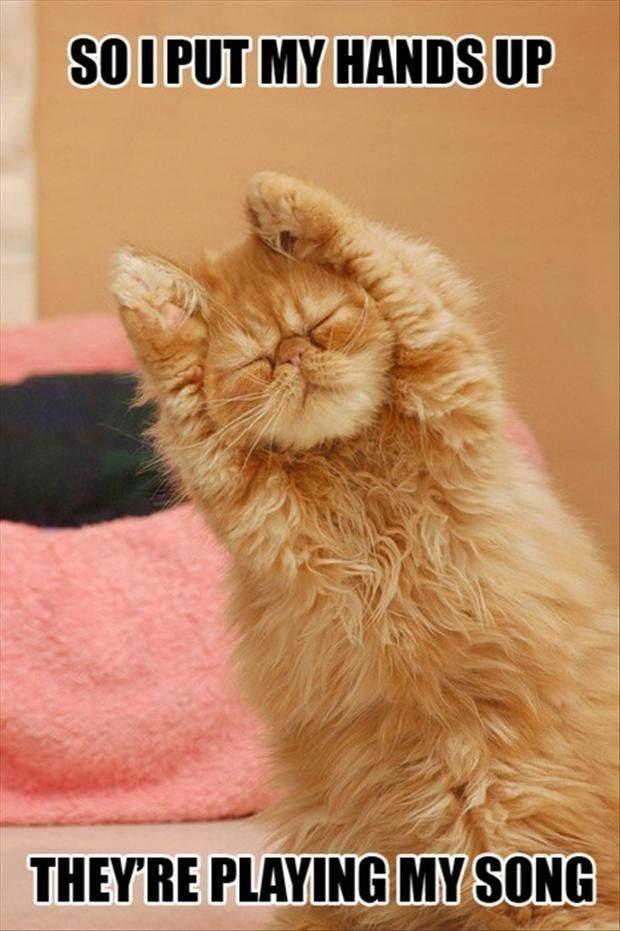 Cat Zumba