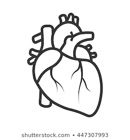 Google Image Result For Https Image Shutterstock Com Image Vector Realistic Heart Icon Isolated On 260nw 447307993 Jpg Heart Drawing Drawings Heart Icons