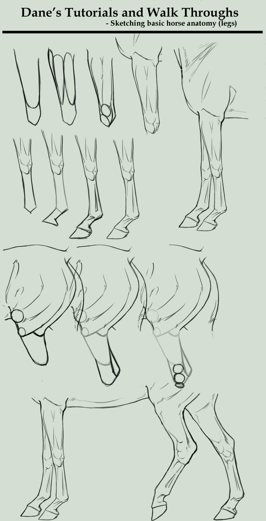 Tutorialwalk Through Sketching Horse Legs By Agerskovart