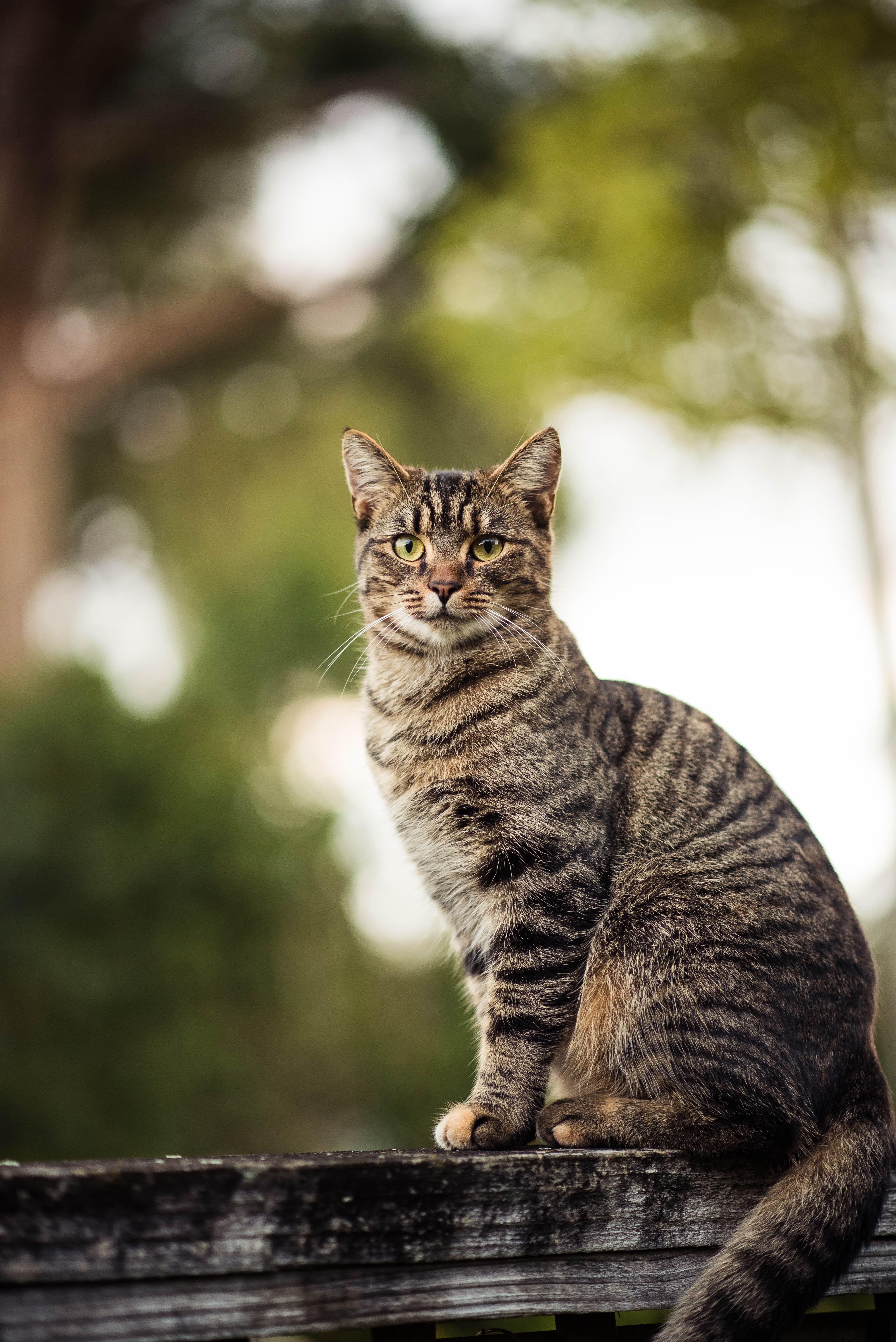 Beautiful Tabby Cat In 2020 Grey Tabby Cats Tabby Cat Cats