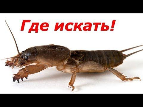 Ловля сома на донку - на червя. часть 2 - YouTube | Rybárčenie ...