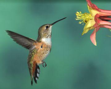 Gerlach Nature Photography Hummingbird Workshop Page Hummingbirds Photography Nature Photography Hummingbird