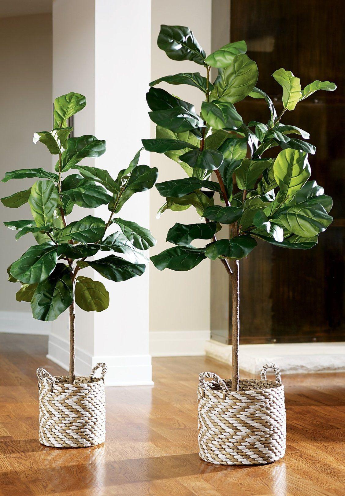 Fiddle Leaf Fig Tree With Images Fiddle Leaf Fig Tree Flower Arrangements Center Pieces Fiddle Leaf Fig