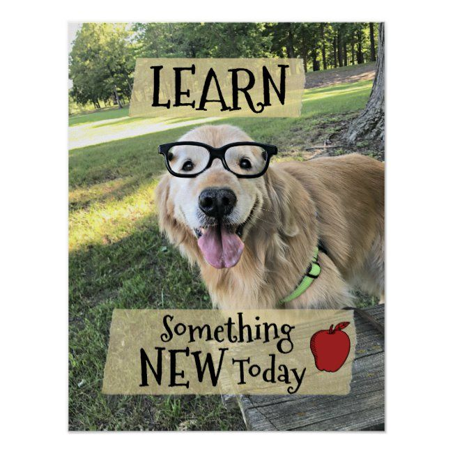 Golden Retriever Dog Learn Something New Classroom Poster