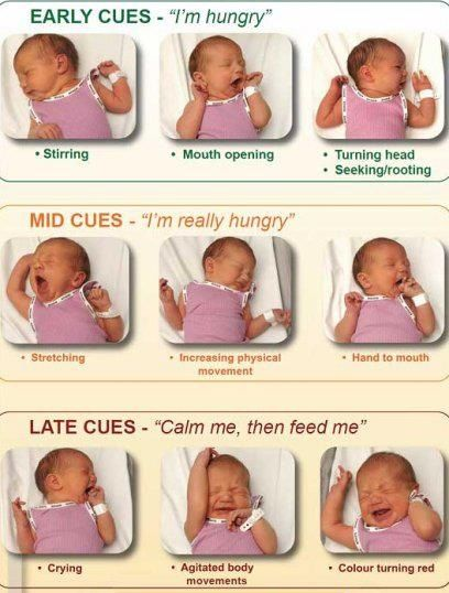 Hunger Cues Chart  Baby Crying, Baby Signs, New Baby Products-5416
