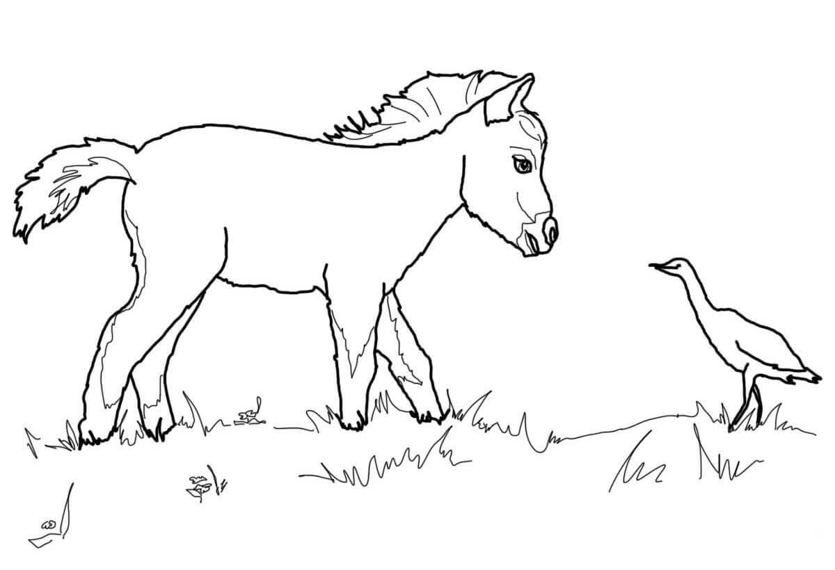 Miniature Horse Foal And Bird Coloring Page Tegninger Fugle Heste