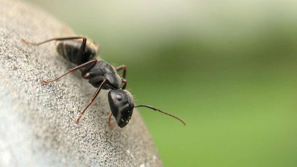 How to Get Rid of Ants ExpertApproved Tricks to