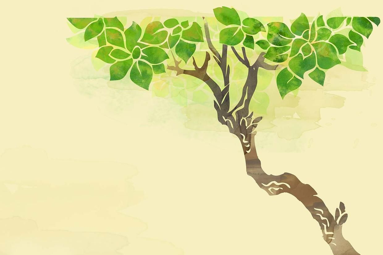 Contact Tree service, Tree care, Plants