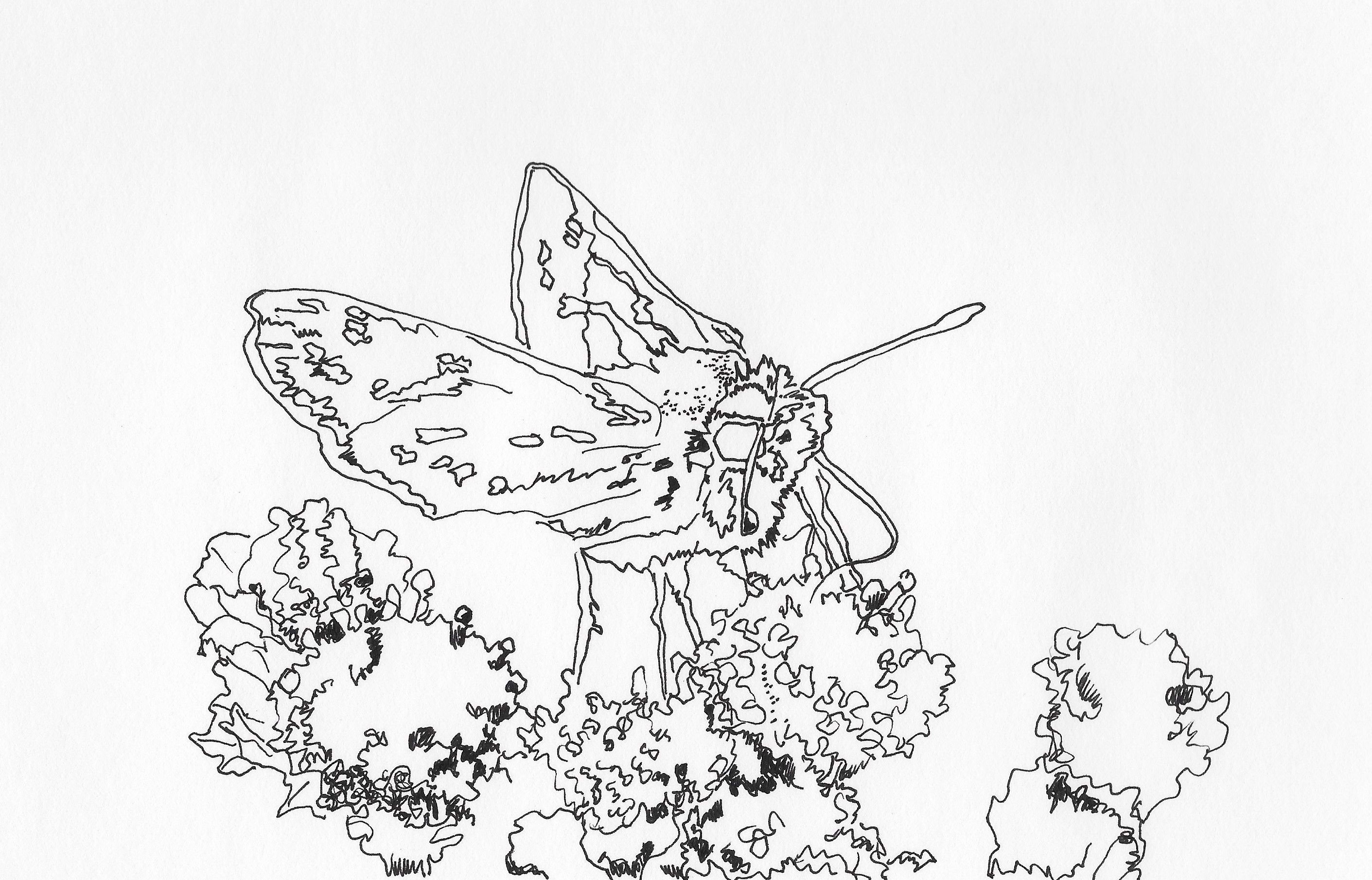 A page from the Simply Butterflies coloring book.   Simply ...