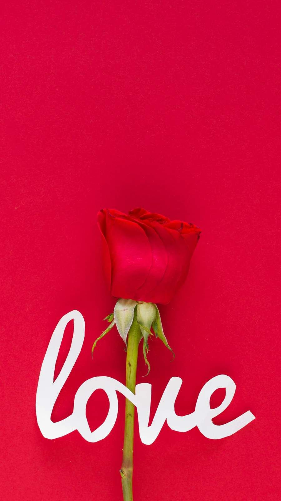 Tap And Get The Free App Nature Beautiful Roses Red Passion Cool Blooming Flowers Romantic Red Roses Wallpaper Rose Wallpaper Beautiful Roses