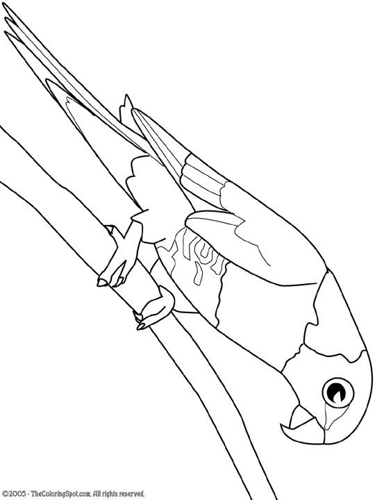 rainbow lorikeet Wild Kratts Bday Party Pinterest Rainbows - best of coloring pages of rainbows to print