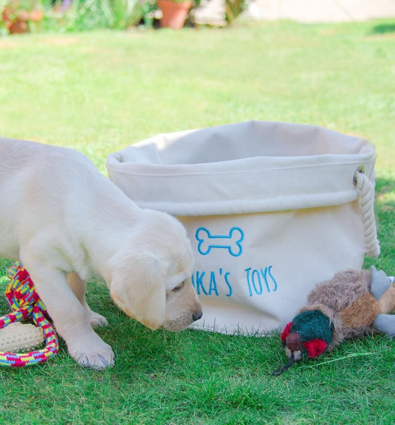 b6d303c0f721 Personalised Dog Toy Storage Basket. Choose any text colour. Cute, useful  and durable