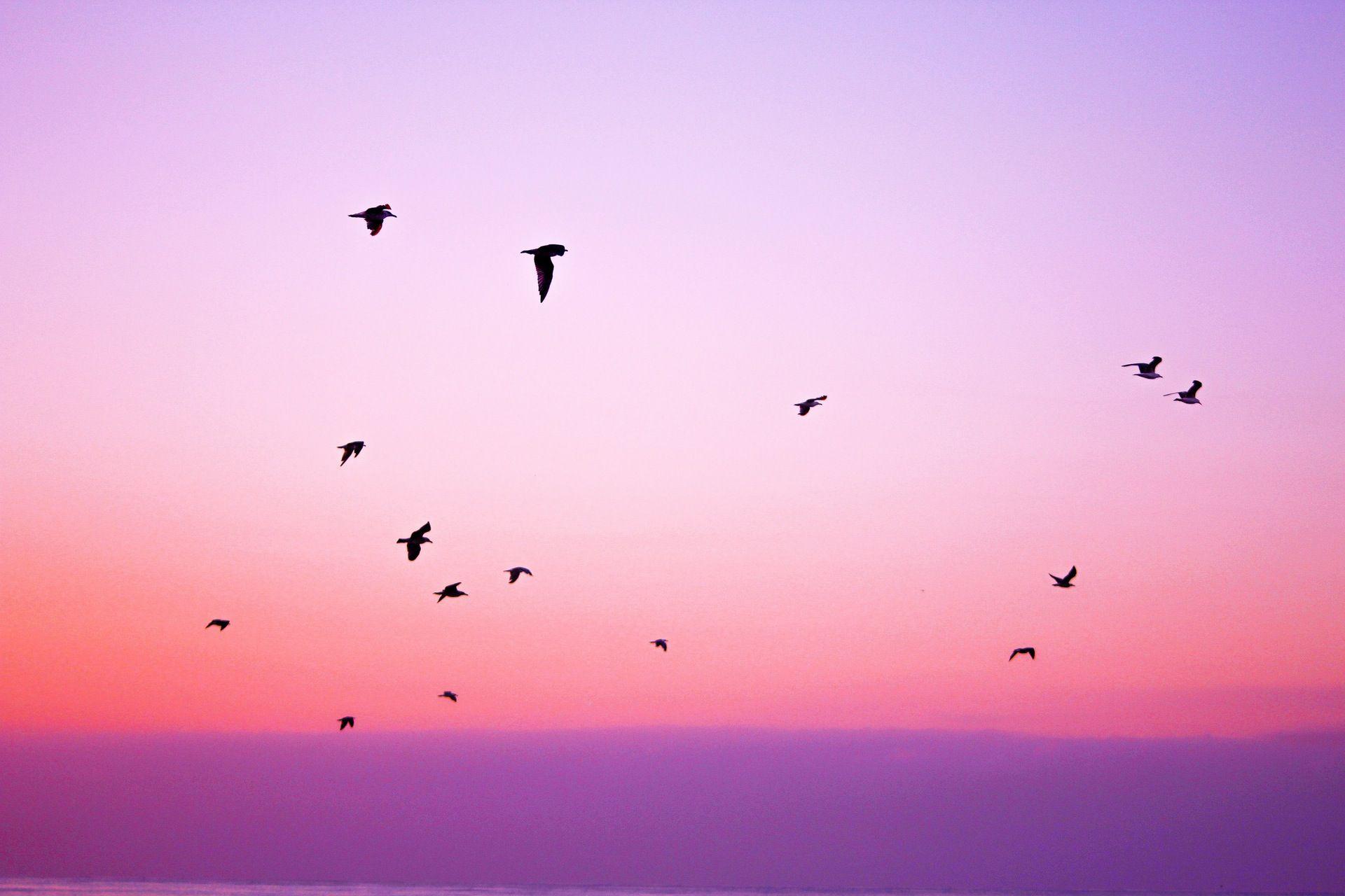 pájaros, cielo, libertad, rosa, morado - Fondos de Pantalla HD ...