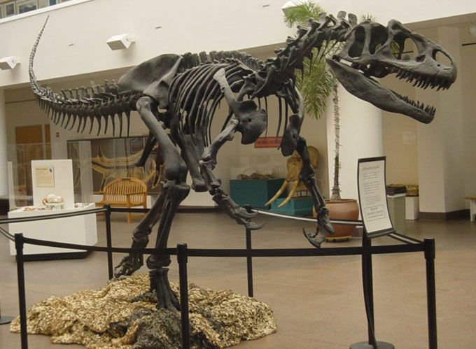 a complete Allosaurus skeleton mounted in the San Diego Natural History Museum.