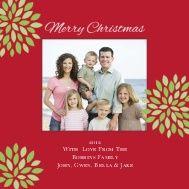 Christmas Mums by Amy Sheridan