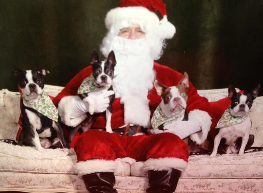 Santa and Bostons 2011