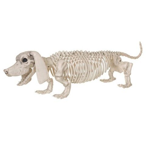 halloween dachshund dog skeleton funny decoration for the doxie household