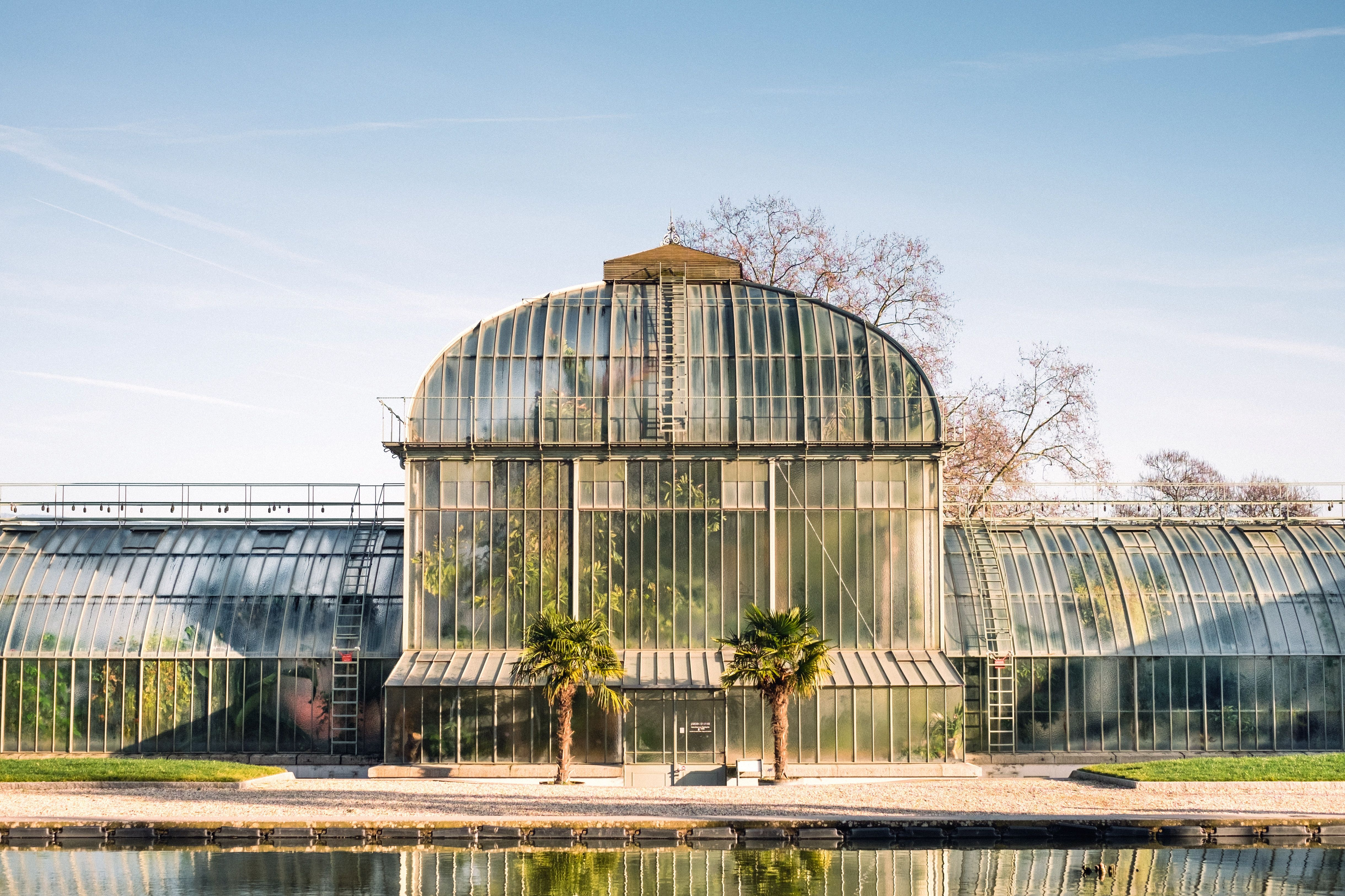 Greenhouse, Palm Trees