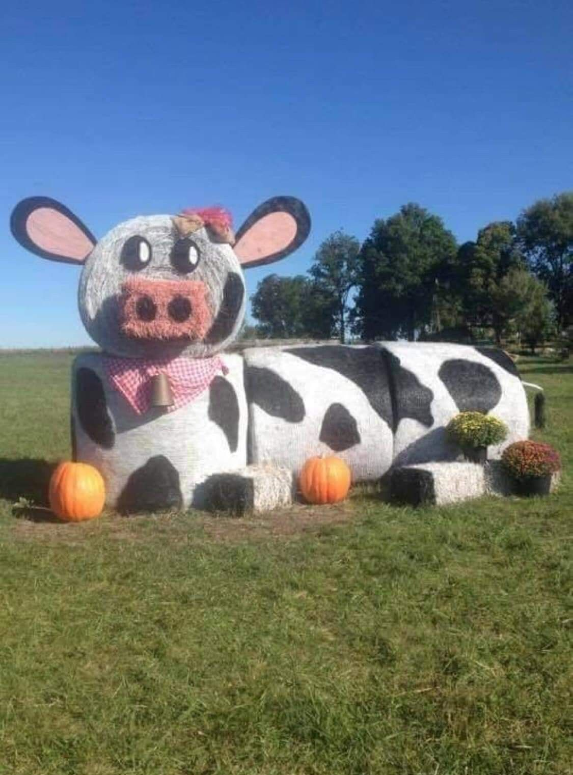 Pin by Linda Schulte on scarecrows Cow decor, Cow pictures