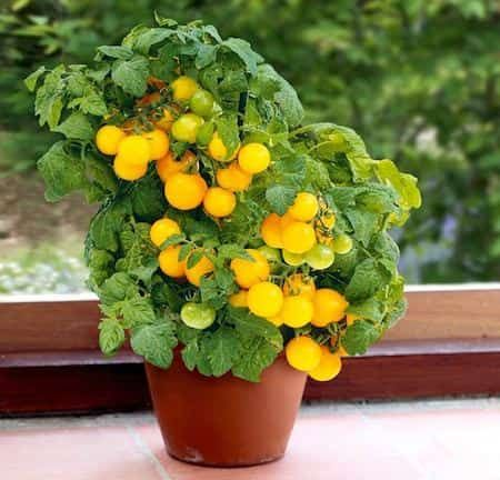 Photo of The 20 easiest vegetables to grow in pots.