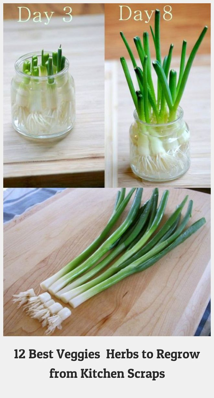 Garden 72335 Best vegetables herbs to regrow from kitchen